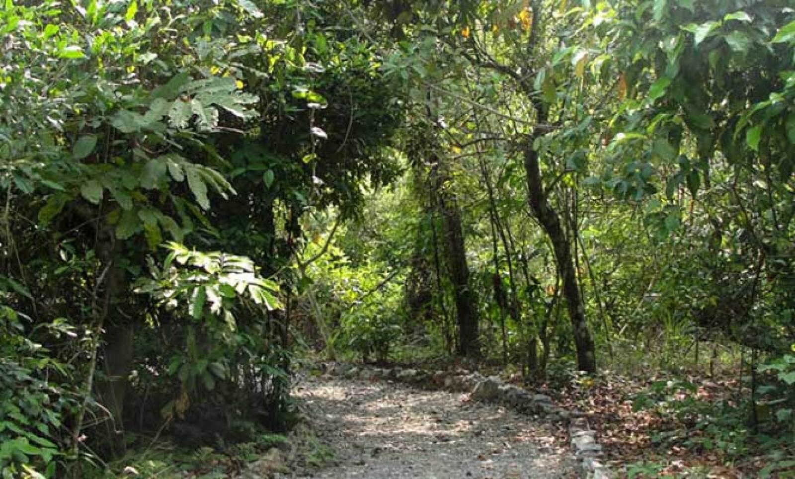 Los senderos del parque están diseñados para que los visitantes puedan conocer una parte de la selva en regeneración así como las especies que lo habitan, como el jaguaroundi, un felino nativo de Veracruz.