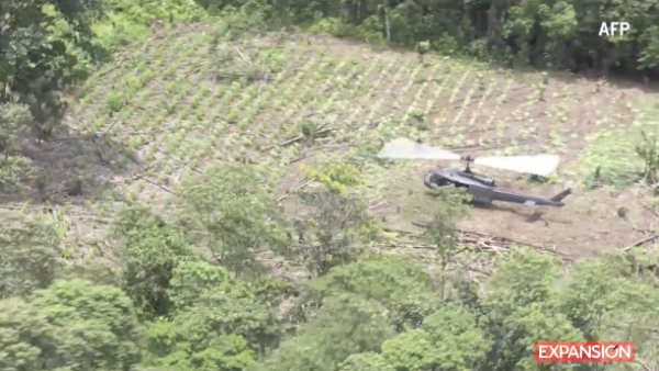 Colombia se mantiene como el mayor productor de cocaína del mundo