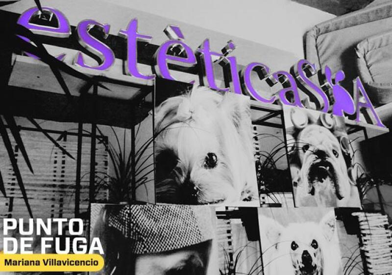 Spa canino_2