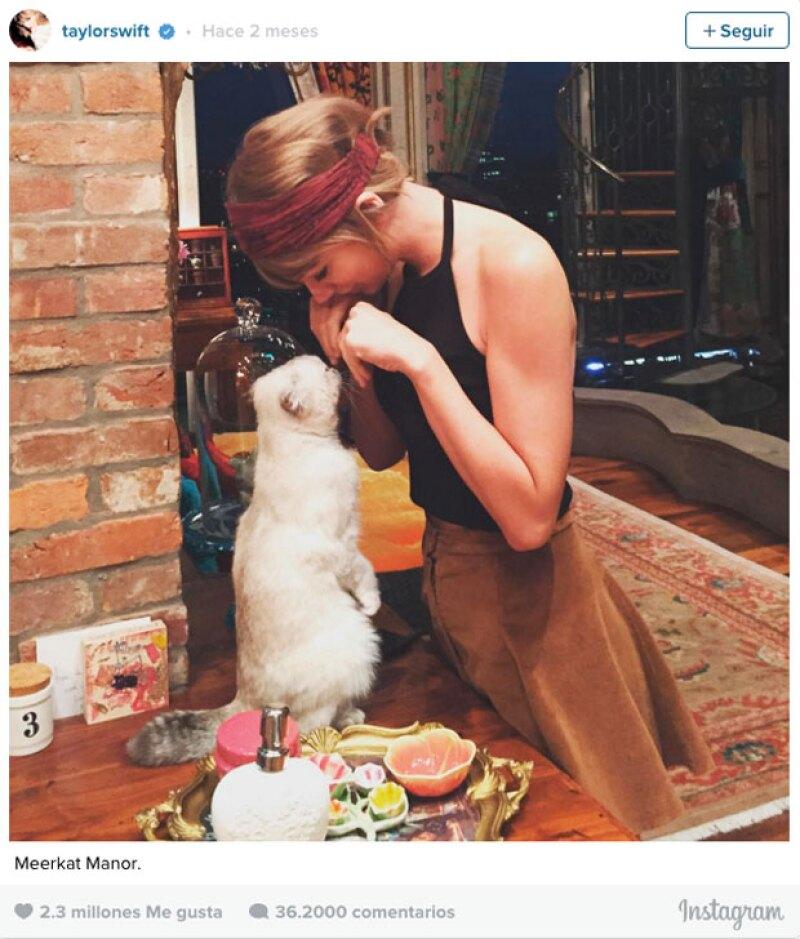 Taylor (la ya reina de Instagram) y su gatita Meredith en el sexto lugar con 2.3 millones.
