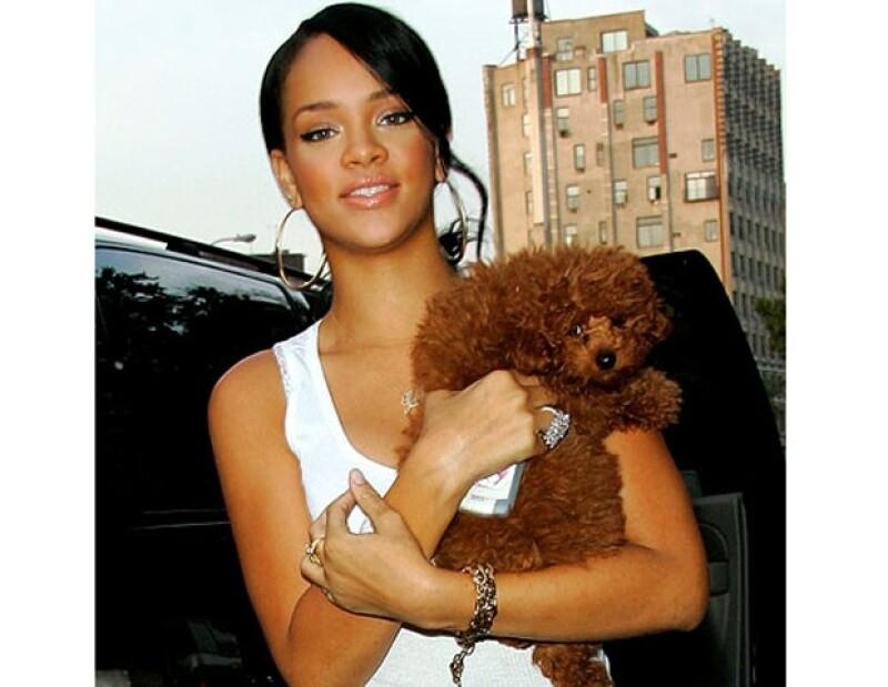 Este hermoso cachorro color chocolate es una de las debilidades de Rihanna.