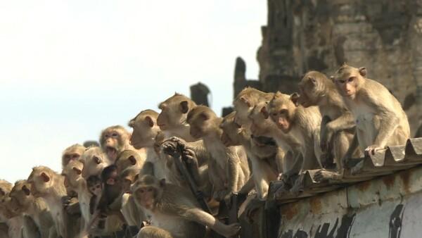 """Tailandia intenta recuperar el control de """"la ciudad de los monos"""""""