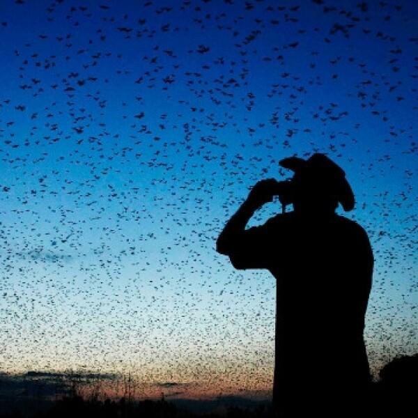 migración de murciélagos