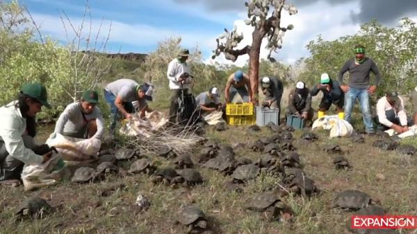 liberación de tortugas en Ecuador.png