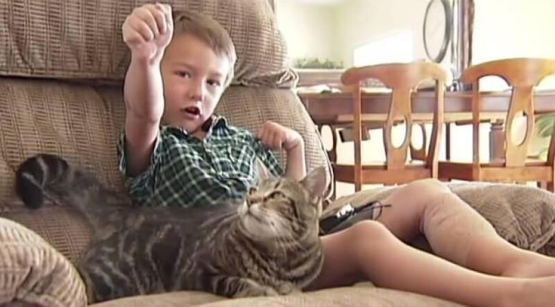 """Un niño fue salvado por su mascota después de que un perro comenzara a atacarlo ferozmente en Estados Unidos. Una revista de mascotas quiere a """"Tara"""", nombre de la gata, en su próxima portada."""