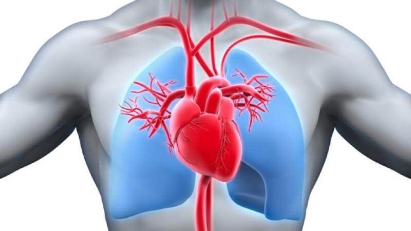 corazon y pulmones