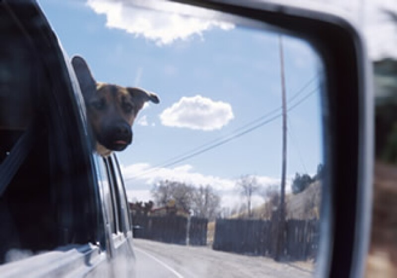 El 21% de los encuestados dijo que permitían a su perro sentarse en su regazo. (Foto: Photos to go)