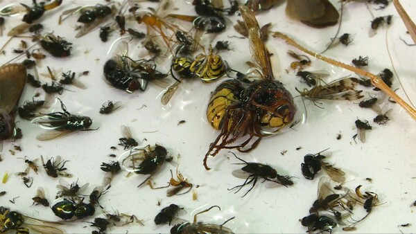 Insectos_Alemania