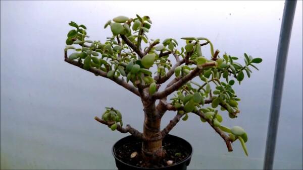 ecologiaverde2