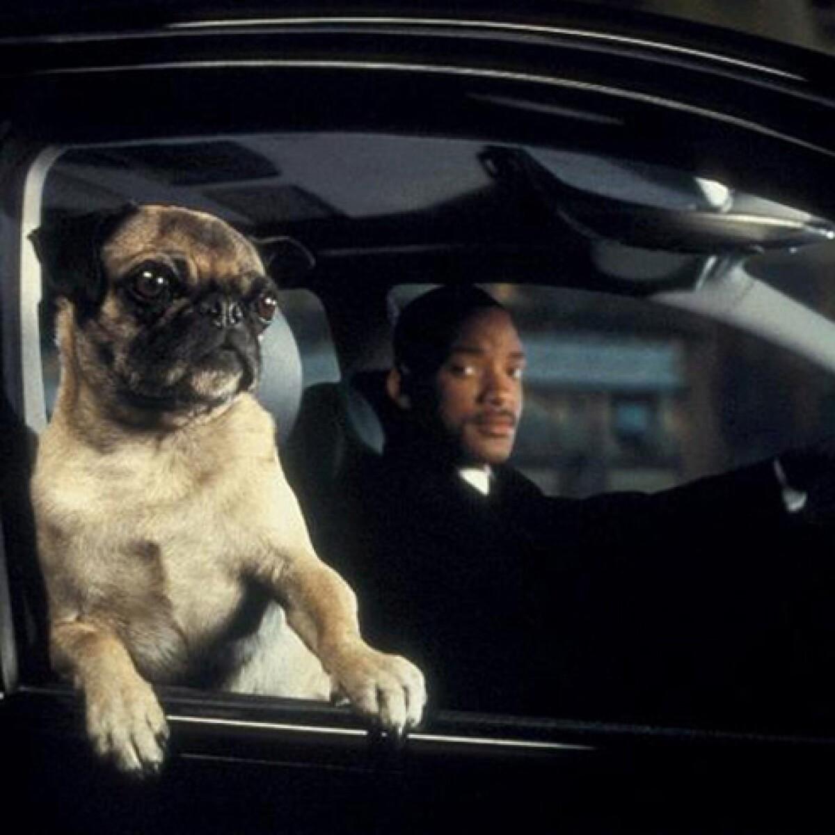 Dime qué perro tienes y te diré quién eres
