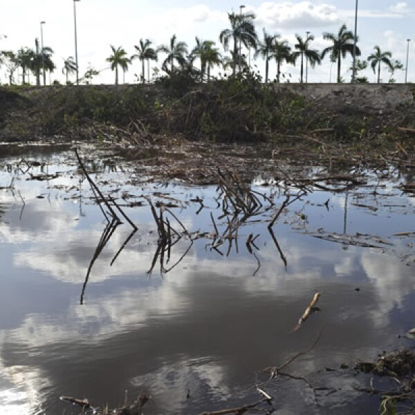 El gobierno dice que 22 hectáreas del manglar fueron taladas; los activistas aseguran que fueron más de 50.