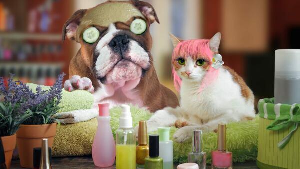 perros gatos hijos spa perrhijo