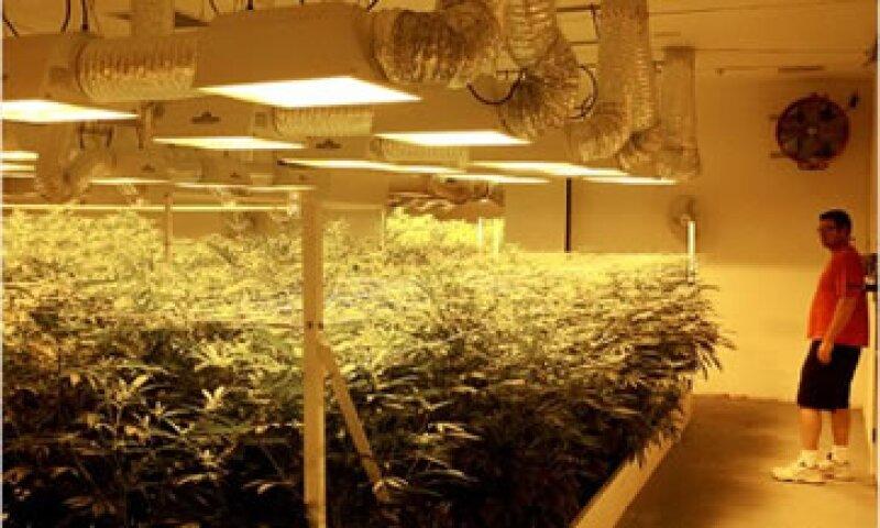 En 2011, los agentes policiales incautaron 3.9 millones de plantas de marihuana.  (Foto: Cortesía CNNMoney.com)