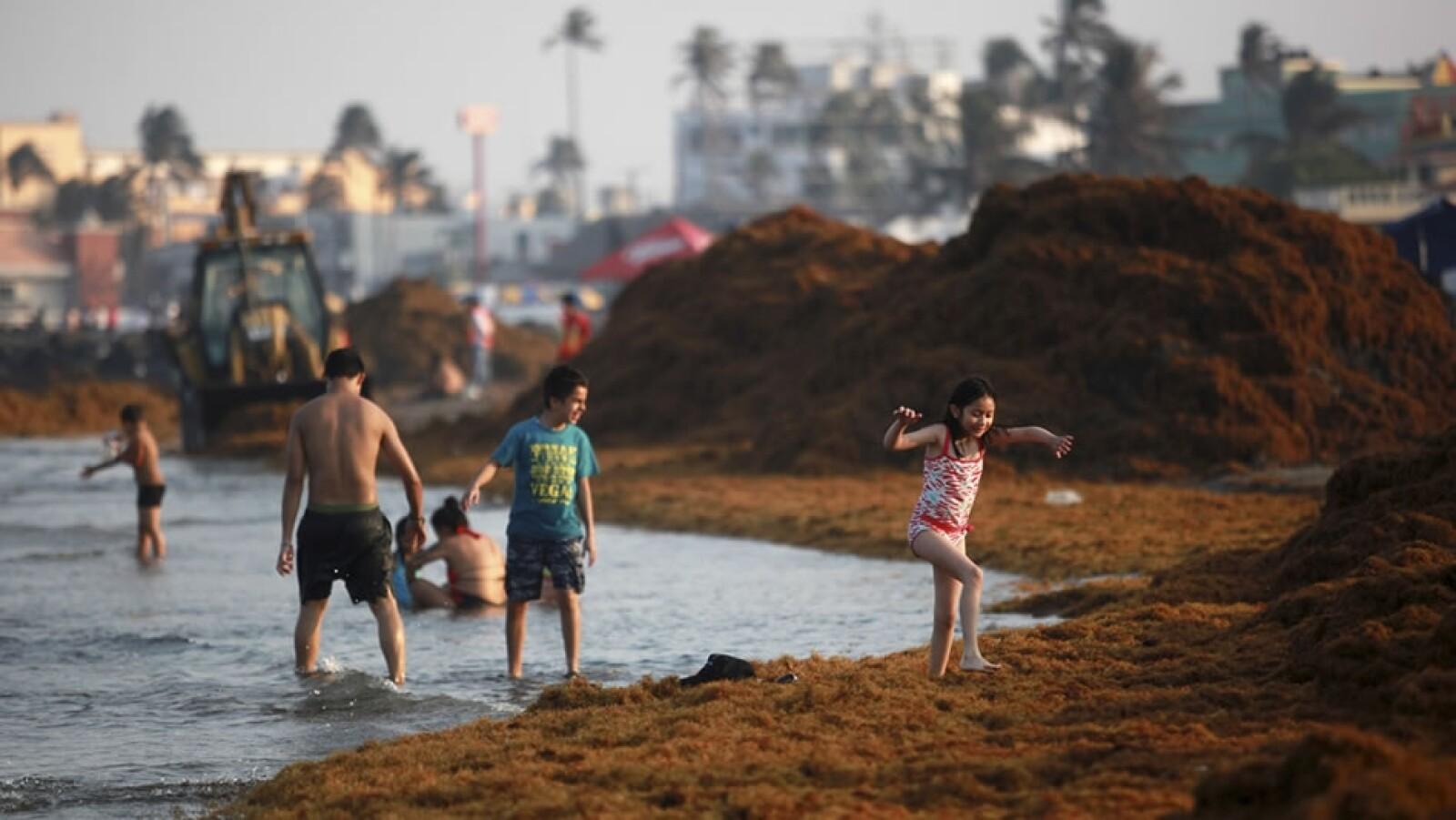 playa veracruz algas