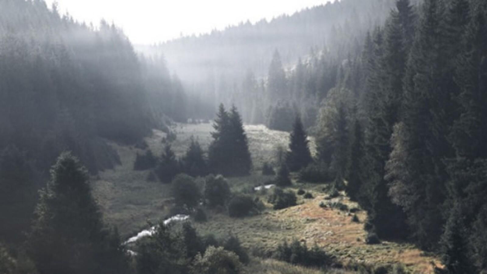 Escenas del bosque en el Parque Nacional Sumava, República Checa
