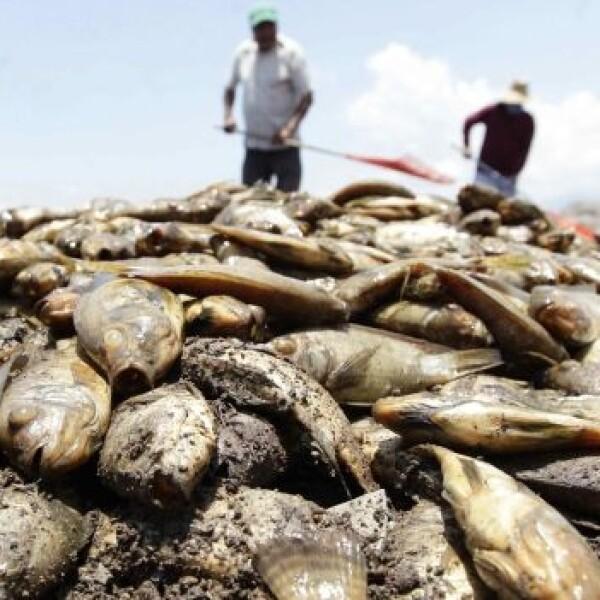 peces muertos en la presa hurtado