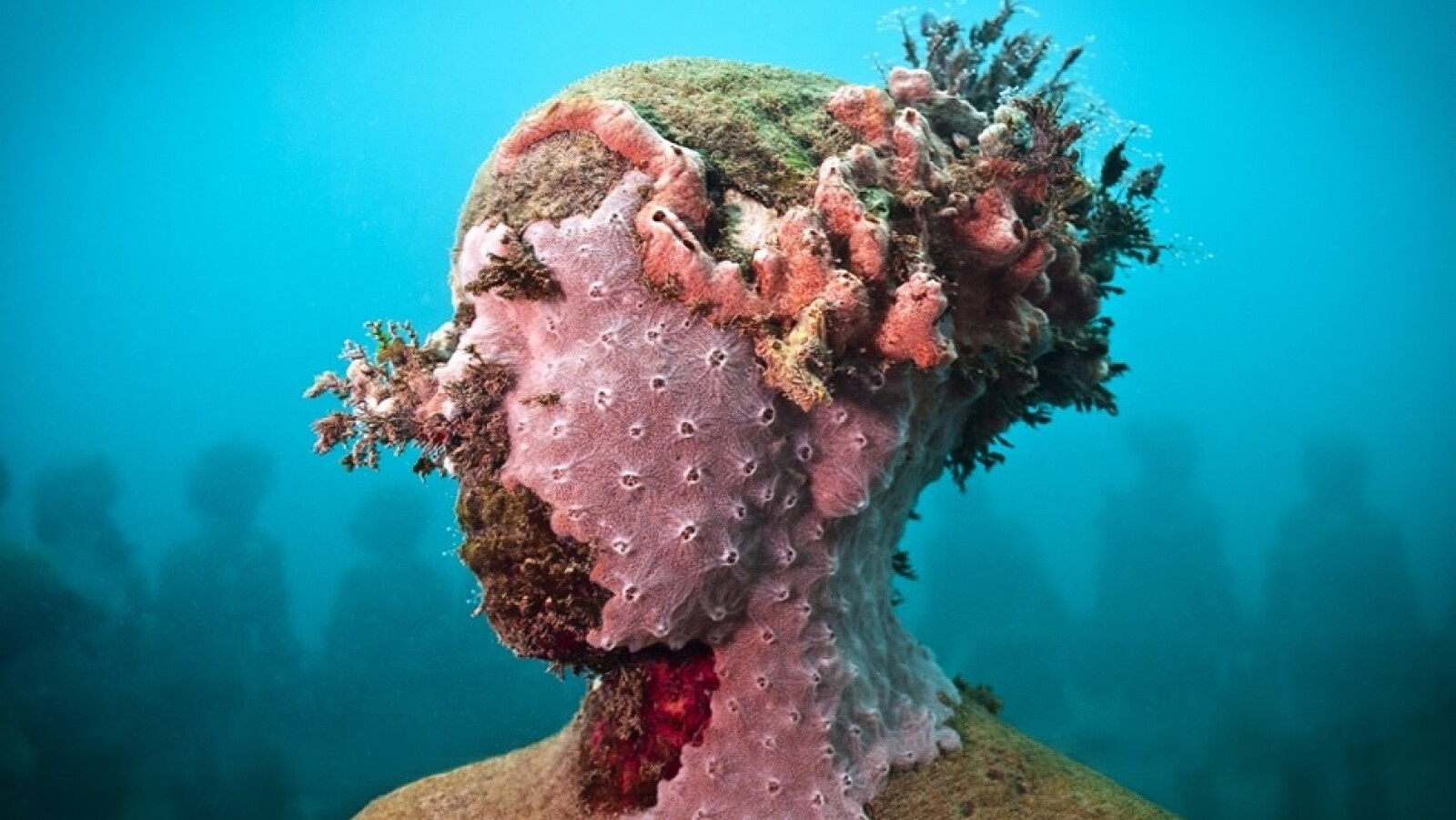 Taylor planta corales en sus esculturas, pero dice que nunca altera los escenarios naturales, y en su lugar utiliza los que fueron cultivados en viveros o fueron dañados por turistas