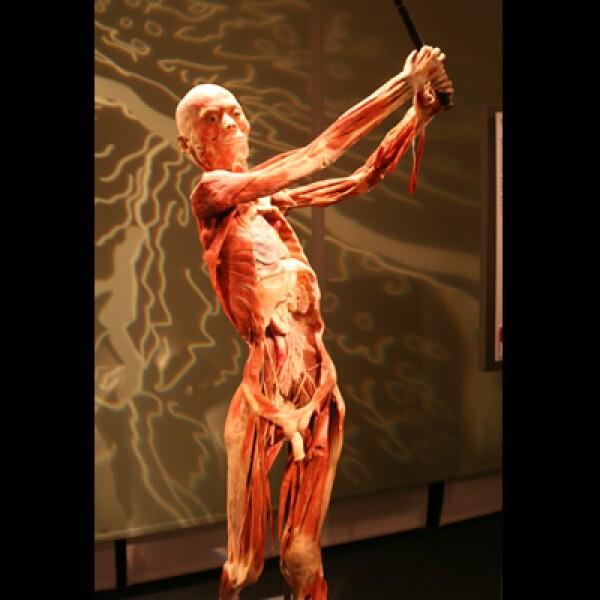 'La parte más difícil de hacer esta exposición', dice el Dr. Glover, 'es disecar el cuerpo. Ese proceso es muy complejo que hace la diferencia entre lo que queremos mostrar y lo que no queremos mostrar'.