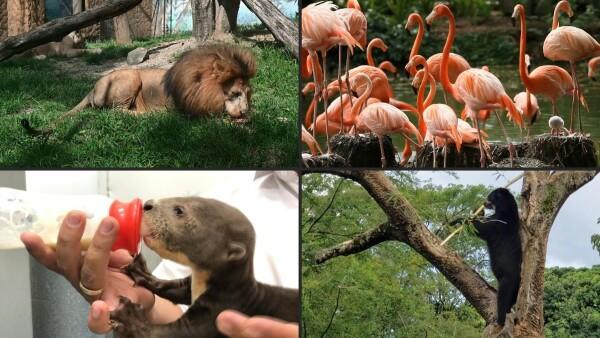 Los animales de zoológicos colombianos están vilo por pandemia