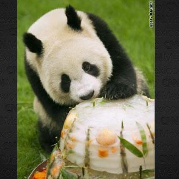 pandavt