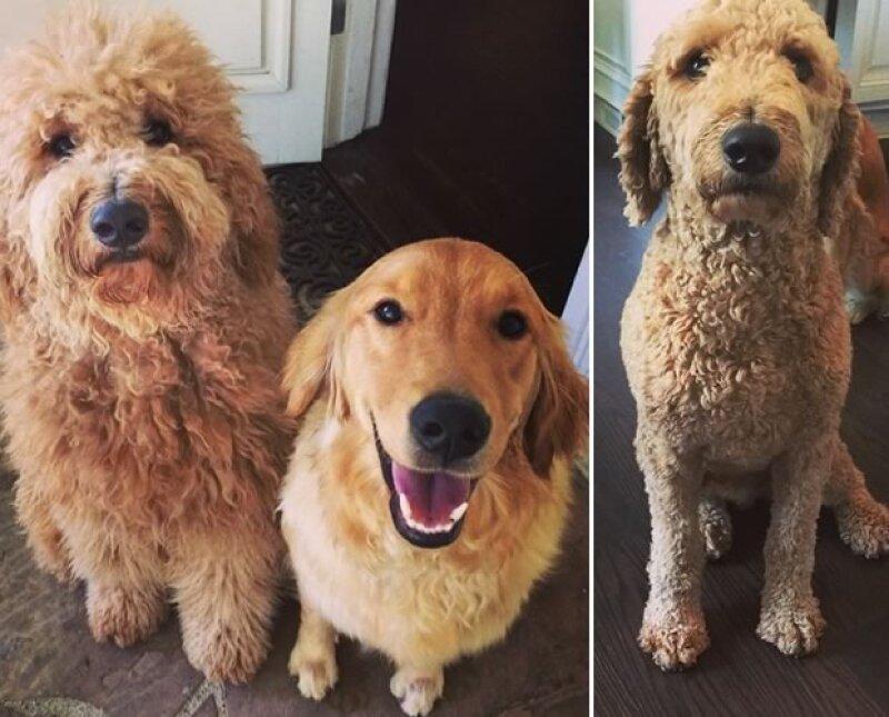 Con 3 perros en casa, el cantante no se puede resistir a la mirada de sus cachorros.