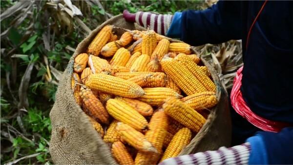 Estos son los alimentos cuyos precios se incrementarán si se acaba el TLCAN