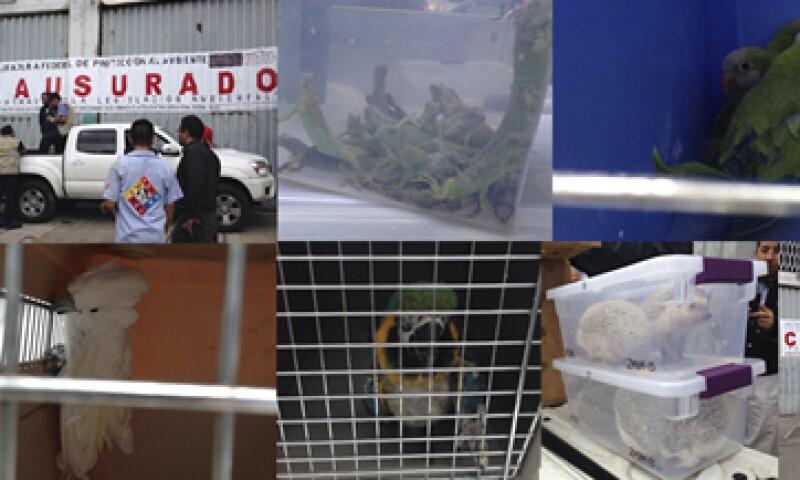 Entre los animales asegurados había guacamayas, loros, cacatúas, etc. (Foto: Tomada de profepa.gob.mx)