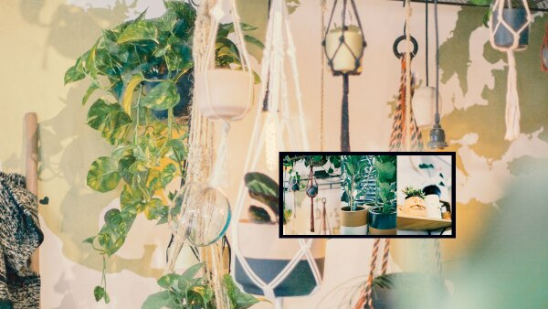 plantas-docmilio-cdmx