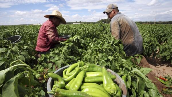 Productores de chile