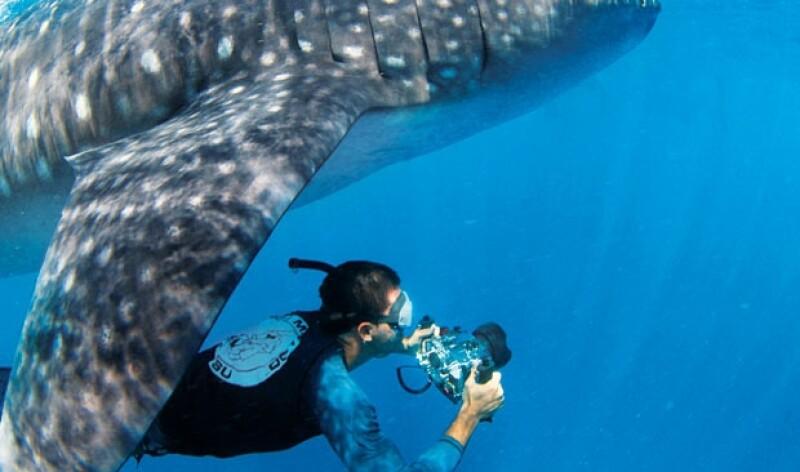 Pelagic Life no busca diversión a costa de los tiburones y ballenas, quieren ayudar a rescatar la fauna marina de México.