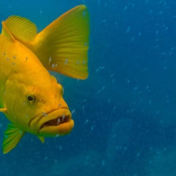 arrecife coral peces 07