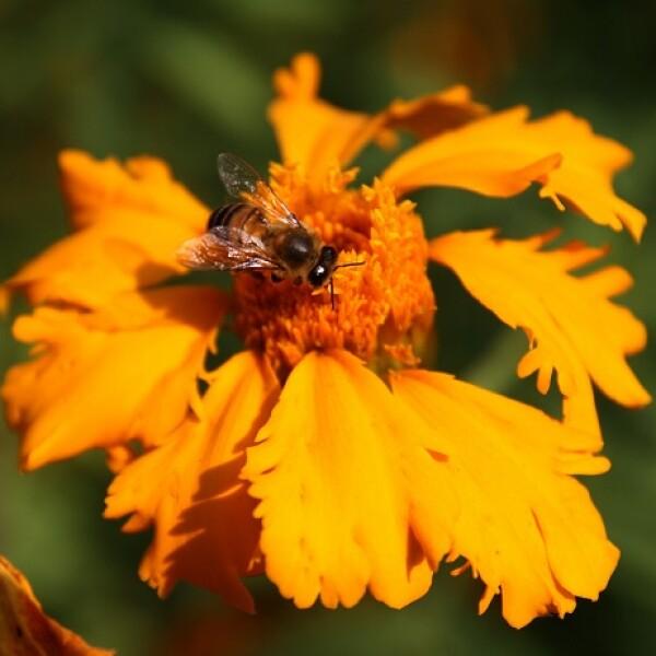 flores de cempas�chitl 3