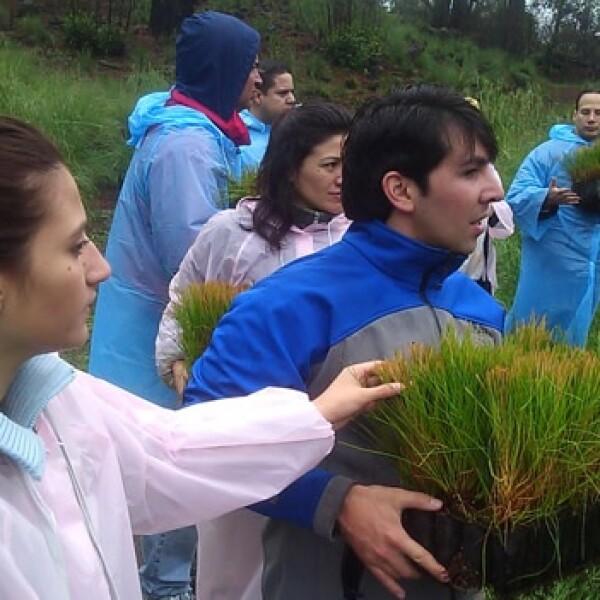 irpt-reforestacion2