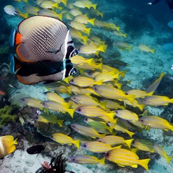 dia mundial de los oceanos 01