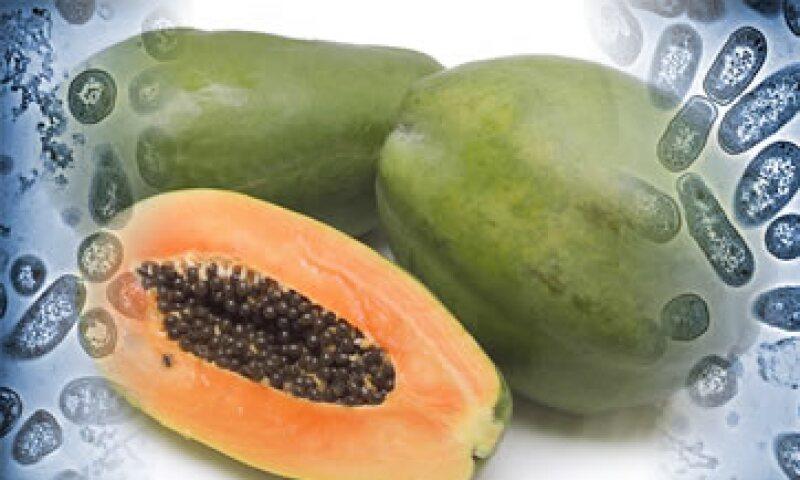 Las autoridades hallaron la cepa de salmonela en dos muestras de papaya recolectadas en Agromod. (Foto: Especial)