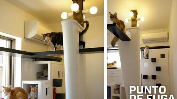 cats2-principal