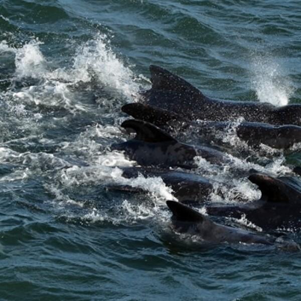ballenas_escocia_cuatro