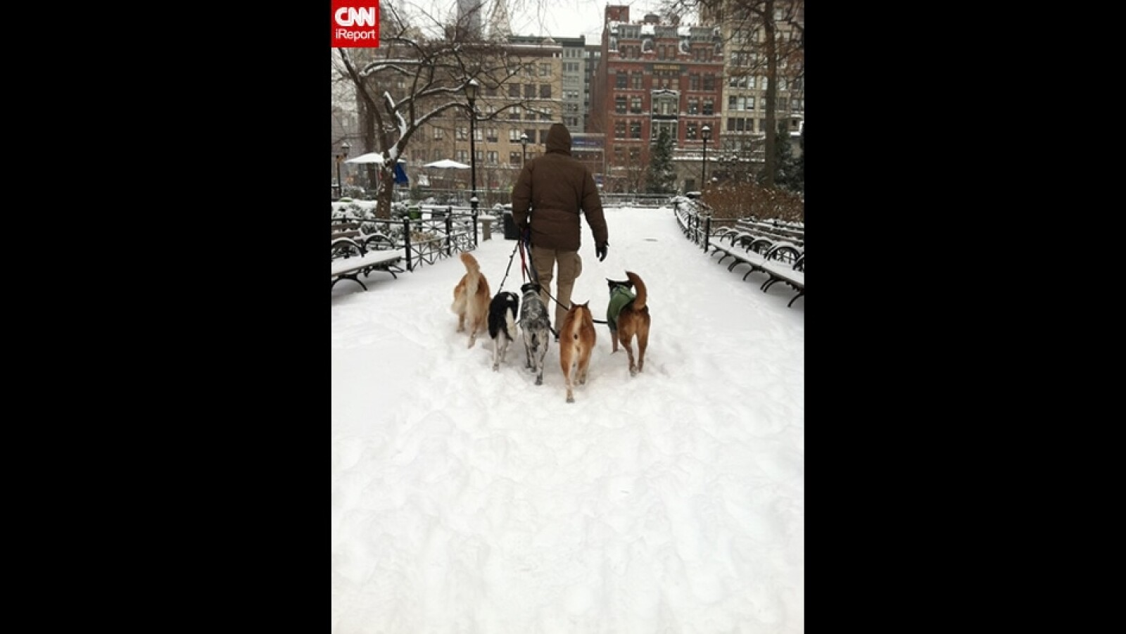 ireport mascotas nieve EU 14