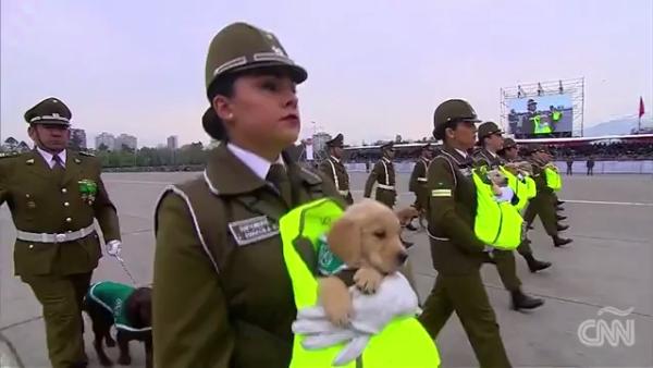 Estos cachorros le robaron la atención a los Carabineros de Chile en un desfile