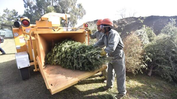 árboles de navidad reciclaje
