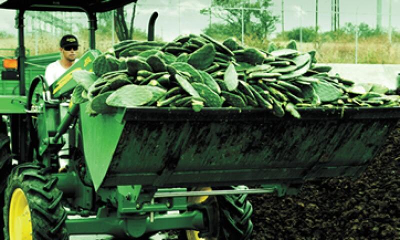 En México hay 12,000 hectáreas de plantaciones de nopal. (Foto: Revista Quo/Ernesto Perea)