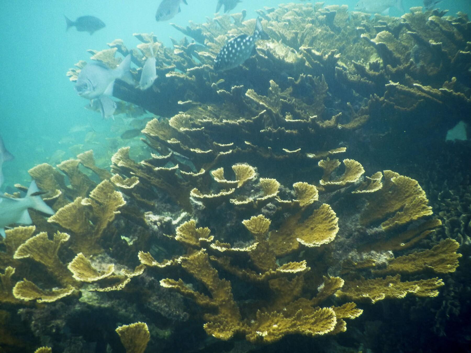Corales Quintana Roo seguro paramétrico