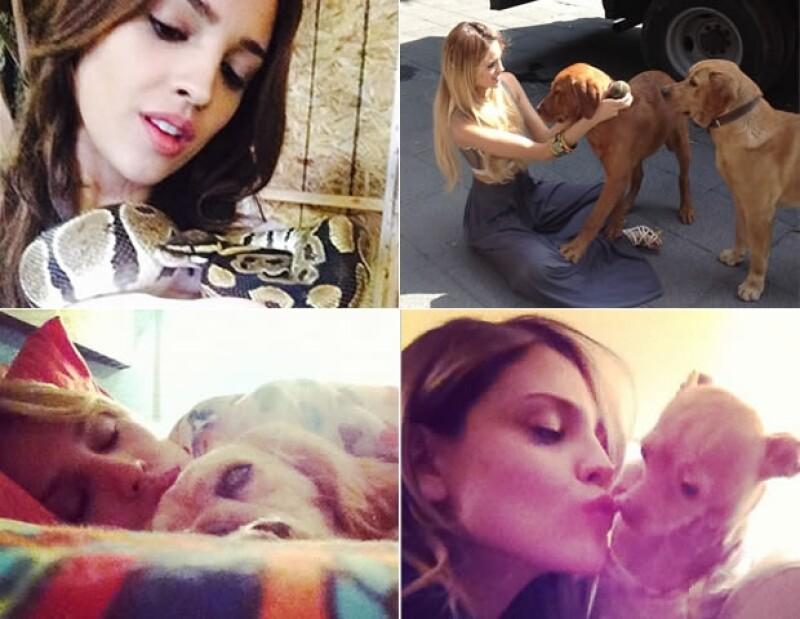 La actriz es amante de los animales, ¡incluídas las serpientes!
