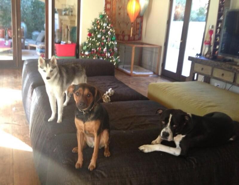 La estrella amante de los perros le dio la bienvenida a su canina familia a una nueva integrante: una chihuahua cachorro a la que nombró `Bean´.