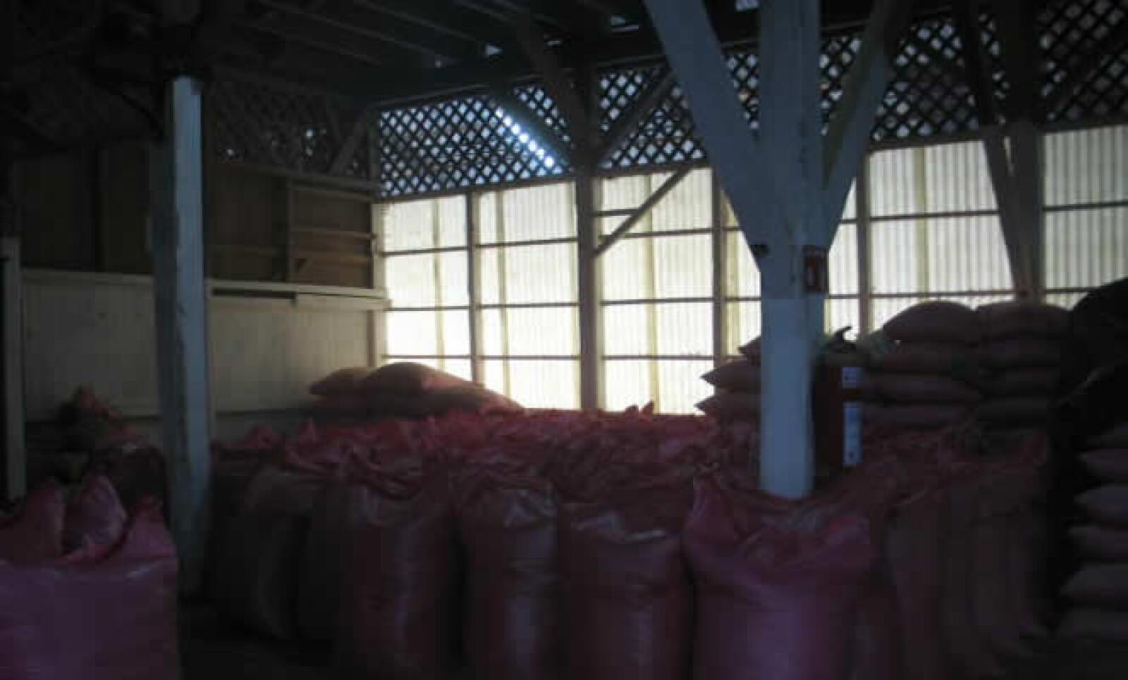 Un cultivo de café tarda 9 meses en estar listo para su cosecha