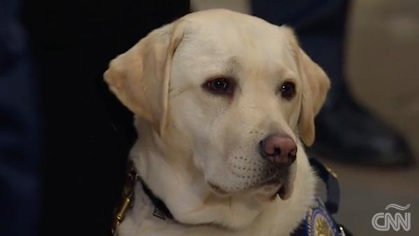 Sully, el perro que acompaña el trayecto de los restos de George H. W. Bush
