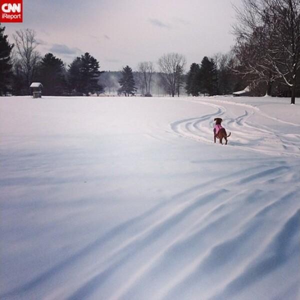 ireport mascotas nieve EU 13