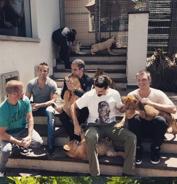 La banda convivió con tigres blancos en su visita a nuestro país.