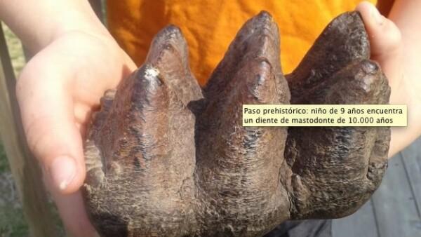 Un diente de mastodonte fue encontrado en Michigan