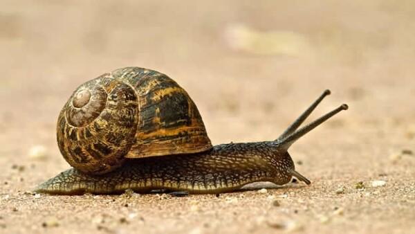 un caracol camina por el suelo